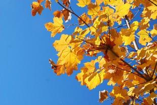 foglie-dautunno2